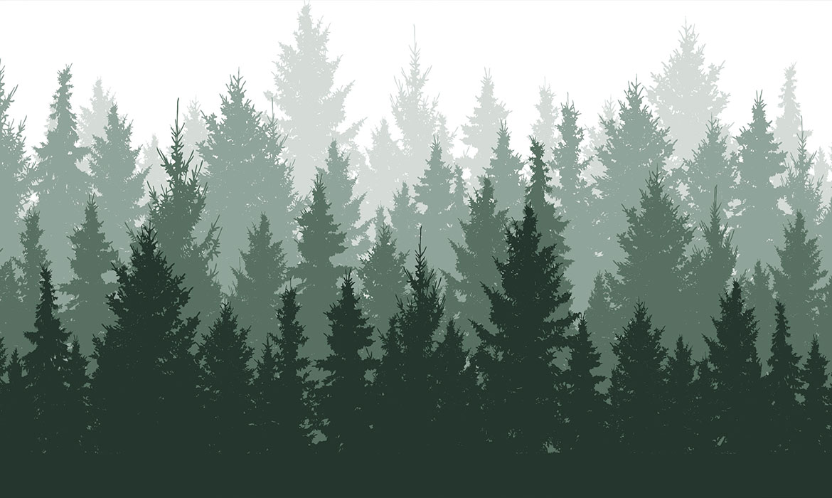 Illustration of evergreen forest